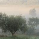 marcigliana-05