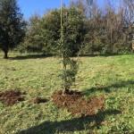 Festa dell'albero 18.11 (1)