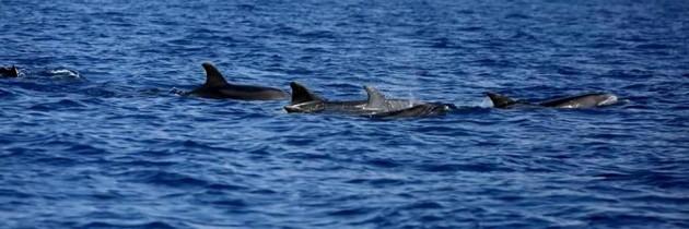 A.M.P. Secche di Tor Paterno Sono tornati i delfini nel mare di Roma